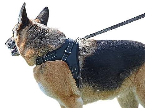 Nuestro perro arnés en Estados Unidos - legendario incluido ...