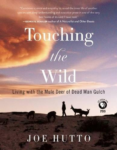 Touching the Wild: Living with the Mule Deer of Deadman Gulch Wyoming Mule