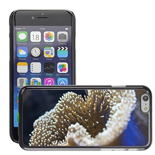 """Bild Hart Handy Schwarz Schutz Case Cover Schale Etui // M00135385 Korallenriff Anemone Unterwasser // Apple iPhone 6 PLUS 5.5"""""""