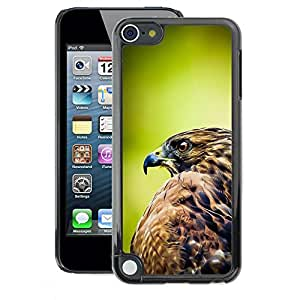 A-type Arte & diseño plástico duro Fundas Cover Cubre Hard Case Cover para Apple iPod Touch 5 (Hawk Green Nature Feathers Bird Prey)