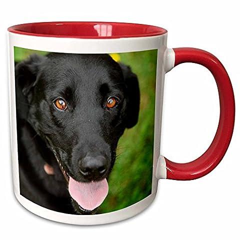 3dRose Danita Delimont - Dogs - Dog - Black Labrador. - 11oz Two-Tone Red Mug (mug_206818_5) - Labrador Coffee