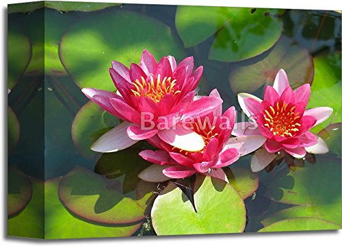 Beautiful Blooming Red Water Lily Lotus Flower With Green Leaves In The Pond Gallery Wrapped Canvas Art (8 in. x 10 in.) Barewalls Leaf