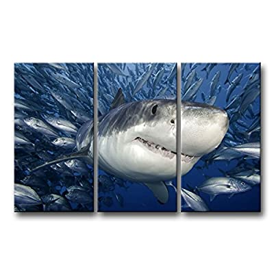 So Crazy Art 3 Panel Blue Wall Art Painting Shark Catching Fish Pictures Prints On Canvas Animal The Picture Decor Oil For Home Modern Decoration Print