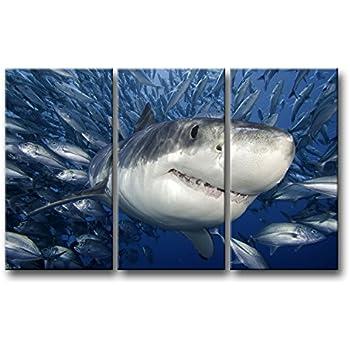 Amazon Com 3 Piece Blue Wall Art Painting Shark Catching