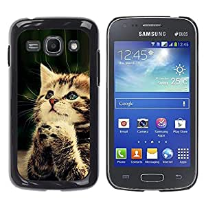 Qstar Arte & diseño plástico duro Fundas Cover Cubre Hard Case Cover para Samsung Galaxy Ace 3 III / GT-S7270 / GT-S7275 / GT-S7272 ( Praying Cute Kitten Baby Paw Furry)