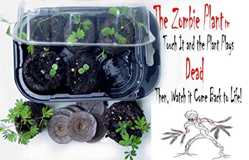 Zombie Plant Grow KIT for Dad - (Touch It and It Plays Dead!)-This Father's Day Dad Can Grow The Plant That Plays Dead When Touched & Comes Back to Life in Minutes! Amazing Idea!