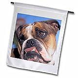 Danita Delimont – Dogs – English Bulldog – NA02 MWE0138 – Michele Westmorland – 18 x 27 inch Garden Flag (fl_84121_2)