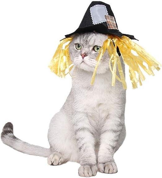 WaitFor - Bonito sombrero para mascotas, perros, gatos, Halloween ...