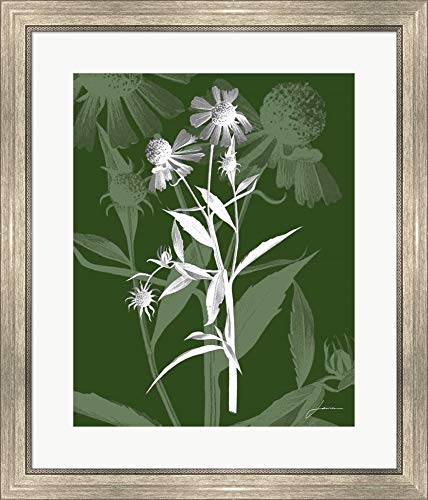 Jewel Stems III by James Burghardt Framed Art Print Wall Picture, Silver Scoop Frame, 24 x 28 ()