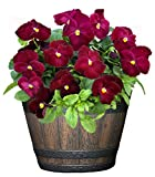 """Classic Home and Garden S74D-037R 9"""" Whiskey"""