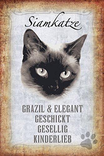 ComCard Gato steckbrief: Gato Siamés – aparatosas & Elegante, geschickt, gesellig, kinderlieb