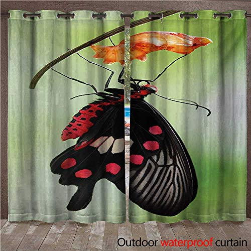 WilliamsDecor Swallowtail Butterfly Outdoor Curtain for Patio Amazing Moment Coming Out of Cocoon Chrysalis Transformation W84 x L84(214cm x 214cm)
