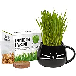 100% Organic cat grass kit/pet grass kit with organic seed mix, organic soil and cat planter. Great gift for pet lovers. Natural hairball control and remedy for cats. Natural digestive aid.