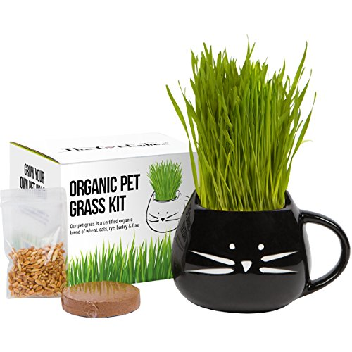 Organic cat Grass Growing kit with Organic Seed Mix, Organic Soil and cat Planter. Great Gift idea for Fur Babies. Natural Hairball Control, Remedy for Cats. Natural Digestive aid. USA Manufactured.