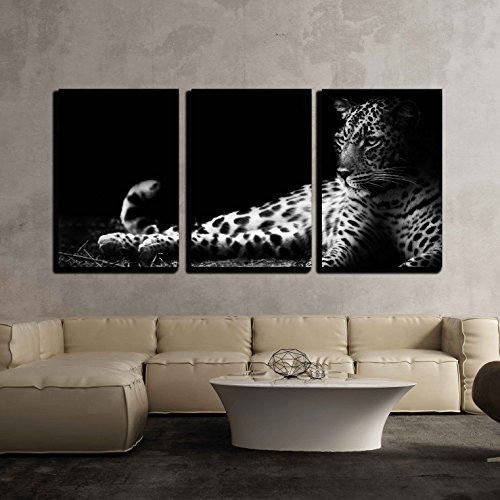 - wall26 - 3 Piece Canvas Wall Art - Black and White Image of a Leopard Lying on The Ground - Modern Home Decor Stretched and Framed Ready to Hang - 16