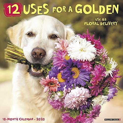 (12 Uses for a Golden 2020 Wall Calendar (Dog Breed Calendar))
