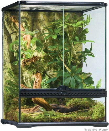 ColorsShop Exo Terra Tall Glass Terrarium, Small