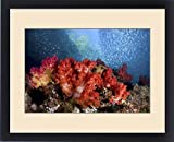 Framed Print of Indonesia, Papua, Fak Fak, Triton Bay. Schooling baitfish swim past coral