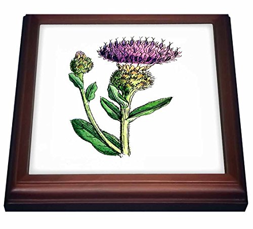 Thistle Ceramic (3dRose trv_80329_1 1859 Image of a Vintage Thistle Trivet with Ceramic Tile, 8 by 8