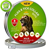 New 2019 Flea Collar for Dogs - 8 Months Protection - Vet Recommended - Hypoallergenic Waterproof - Adjustable Flea and Tick Collar for Dogs - Natural Prevention from Fleas Ticks Larvae Treatment