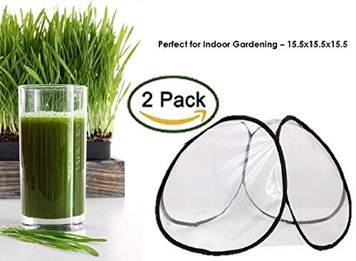 Premium Wheatgrass/ Cat Grass Seeds. Non-GMO, USDA Organic. - Grass Seed For Cats