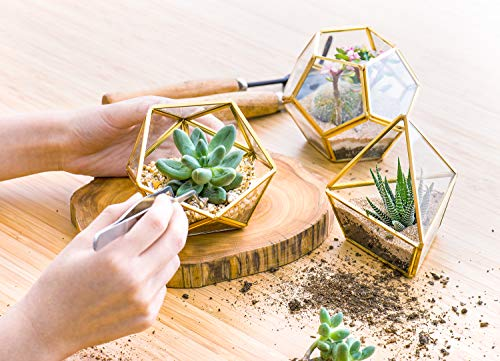 Mkono 4 Inch Mini Glass Geometric Terrarium Container Set Of 3 Modern Tabletop Planter Windowsill Decor Shelves Diy Display Box Centerpiece Gift For Succulent Air Plant Miniature Fairy Garden Gold