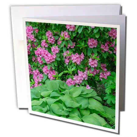 3dRose Danita Delimont - Flowers - Oregon, Portland, Pink blossoms of rhododendrons in bloom. - 12 Greeting Cards with envelopes (gc_279358_2) (Blossom Portland)
