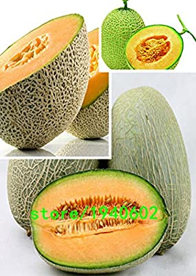 50pcs Super Big Sweet honey-dew melon Seeds Hami melon Seeds Fruit Seeds Cantaloupe Jumbo Melon Heirloom Succulent Plants