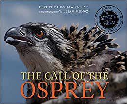 Image result for the call of the osprey