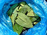 Home Comforts LAMINATED POSTER Stimulant Coca Leaves Coca Crop Erythroxylum Coca Poster 24x16 Adhesive Decal