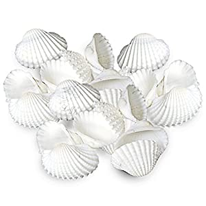 20 Pristine White Natural Aquarium Seashells -- Provides Calcium, Increases pH in saltwater tanks - 100% Pet-safe & non-toxic - Home decor, Create Beach vibe at home - Ideal for Turtle, Guppy, Molly