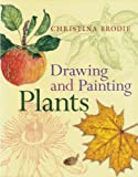 Drawing and Painting Plants, Christina Brodie, 0881928410