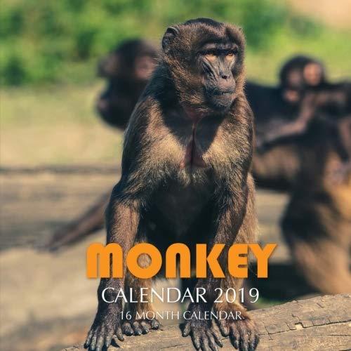 Monkey Calendar 2019: 16 Month Calendar