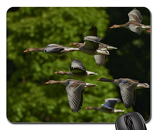 Mouse Pad - Flock Of Birds Canada Geese Geese Wing - Wings Canada