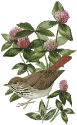 Vermont State Bird (Hermit Thrush) and Flower (Red Clover) Counted Cross Stitch Pattern