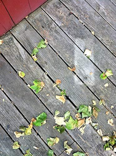 Home Comforts Laminated Poster Wood Leaves Deck Santa Cruz Season Fall Vivid Imagery Poster Print 11 x 17