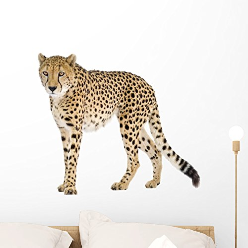 Wallmonkeys Cheetah Wall Decal Peel and Stick Animal Graphics (24 in W x 21 in H) WM335715