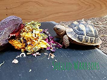 Shelled Warriors Tortoise Just Flowers Mix Ready To Feed Only