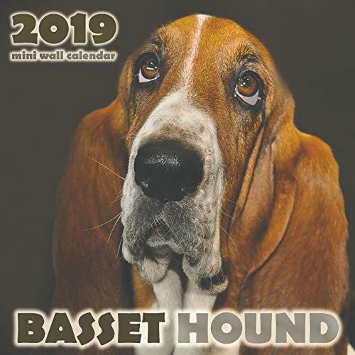 Basset Hound 2019 Mini Wall Calendar