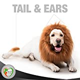 Beloved pets Original Lion Mane for Dog 100% Funny - Realistic Costume for Dog With Ears and Tail - Gift Dog Clothes, Party Dress for Medium and Large Dogs (Dark Brown)