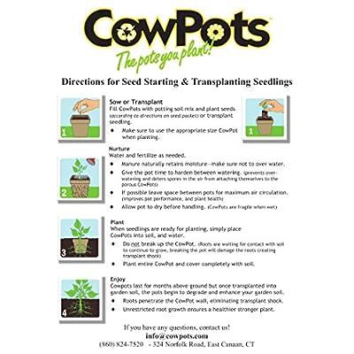 CowPots CP3-12 3-Inch, 12-Pack : Fertilizers : Garden & Outdoor
