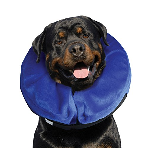 Amazoncom KONG Cloud ECollar Dog Collar Large Pet Recovery - Dog portrait photography shows how they hate wearing the cone of shame