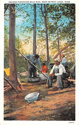Rice Antique - Detroit Lakes Minnesota Indians Thrashing Wild Rice Antique Postcard K105652