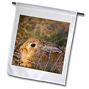 Danita Delimont - Rabbits - Eastern cottontail rabbit, Benton Lake NWR, Montana - US27 CHA1300 - Chuck Haney - 18 x 27 inch Garden Flag (fl_91734_2)