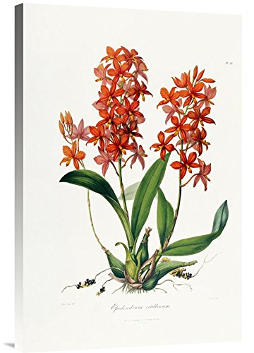 Global Gallery red orchids wall decorations