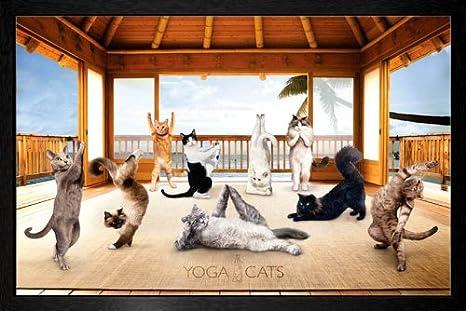 Amazon Com Gb Eye Yoga Cats Hut Framed Poster 64x94 5cm