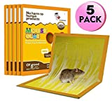 JCHOPE Mouse Trap, Mouse Glue Trap, Mouse Glue Traps, Mouse Glue Boards, Mouse