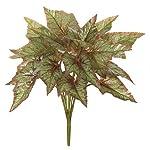 AUF001-15-Inch-Begonia-Bush-Signature-Foliage