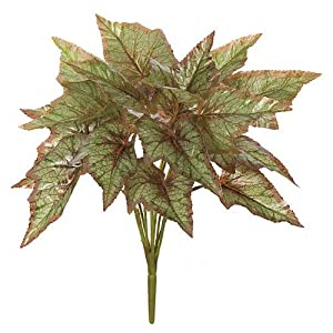 15 Inch Begonia Bush Signature Foliage 42