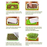EBaokuup 10Packs Seed Sprouter Tray with Drain